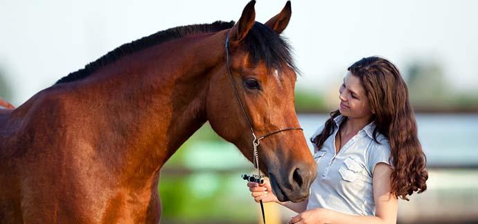 horse-reiki